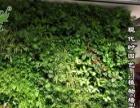 植物墙,室内景观生态植物墙,植物墙厂家直销