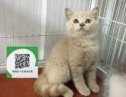 烟台哪里有蓝猫出售 烟台蓝猫价格 烟台宠物狗出售信息