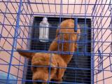 五个月大的泰迪犬