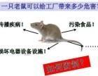 专业杀虫灭鼠,除四害,灭鼠有绝招蟑螂保灭绝