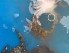 钓野生靠山红螃蟹