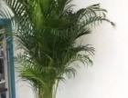 天津河西区花卉租赁 河西区绿植租赁 园林养护