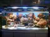 北京专业清洗鱼缸 观赏鱼租摆 观赏鱼养护 鱼缸租赁