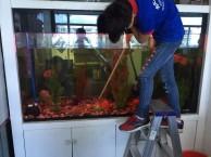 深圳龙华专业清洗护理鱼缸 出售出租鱼缸 观赏鱼