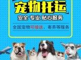 杭州到恩施宠物托运全程照料喂食点击查询详情