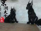泉州哪里有卖大丹犬的