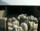 羊厂,有营业执照,手续齐全