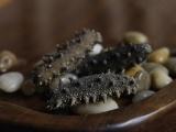 深圳有海参吗,哪里买,多少钱一斤