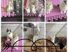 指导新猫舍建设(一手货源活体宠物批发包健康求合作)