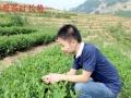 福建省安溪小志茶叶专业合作社厂家直销专业散装批发