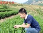 安溪小志加盟 烟酒茶饮料 投资金额 5-10万元