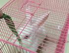 自家养的小白兔低价出售带笼子