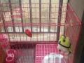 狗狗的宠物笼子超大型
