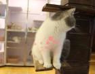 哈尔滨人都到哪里去买加菲猫 哈尔滨较便宜加菲猫价格