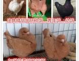 精品观赏鸽,肉鸽,品种齐全,信誉第一,支持全国发货