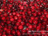 新鲜蔓越莓