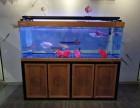 锦鲤 冷水鱼,热带鱼,鱼缸,龙鱼专卖