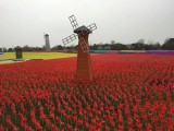 泉州荷兰风车展览制作 大型风车节