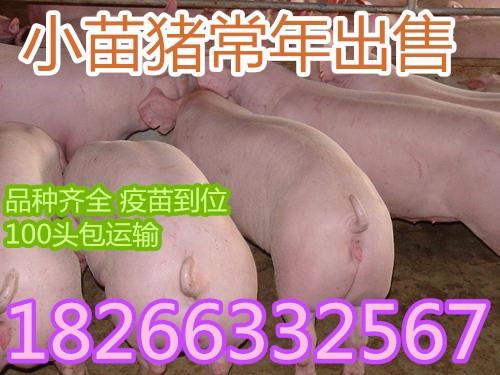 f0e6332e1643e7329ca31634673cf511.jpg