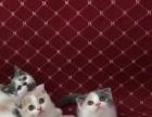 长沙私营猫咪出售