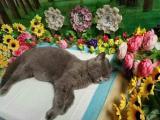 贵阳家庭宠物殡葬