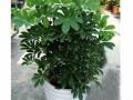 常州花木租摆 供应绿色植物出租
