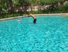 自由泳/蛙泳 游泳培训班 长年招生 随报随学