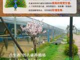 广西古生态孔雀养殖园