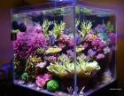 私人订制鱼缸水景与系统维护