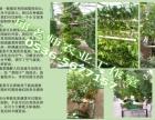 无土栽培,寿光丰科阳台景观,自然种植,回归温室建设,温室设计