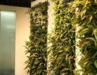 仿真人造草坪,仿真植物墙,仿真草坪地毯,仿真植物