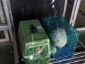 广东梅州丰顺地区宠物猫狗空运