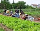 大南湖龙泉寺附近农庄自己租地收获无公害蔬菜