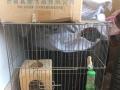 出售龙猫柜笼和标笼
