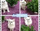 苏州本地家庭猫舍出售蓝猫,渐层,加菲,金吉拉等,健康保障