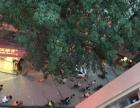 夏园综合楼 人流超大 商铺火爆招商中 二到五层