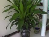 温州乐清专业绿植养护