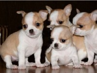 长沙什么地方有狗领养 长沙宠物赠送领养