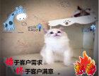 专业繁殖精品布偶猫 签协议包健康纯种 高品质养宠物