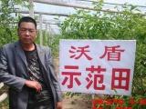 丽江市冲施肥、沃盾草莓冲施肥