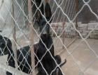 纯种黑狼犬幼崽多少钱一只 纯种黑狼犬幼崽价格