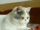 【浅梵三花】加菲猫妹妹诚心找新家