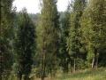 土地 转让广西河池凤山林场林地25亩