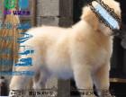 养不死才是王道 福州基地直销金毛犬 健康保障