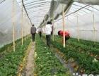 2016年,草莓采摘,农家乐活动,团购更优惠