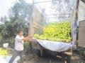 漳州专业柚子专车整车零担货运,送货上门,发全国