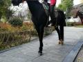 租马 骑马 运动
