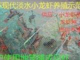 小龙虾基地长年供小龙虾种,龙虾苗包技术,包成活全程专业指导