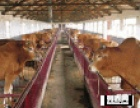 忻州市现在肉牛养殖情况