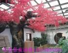 信阳制作生态园假树